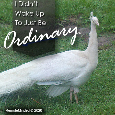 I didn't Wake Up to Just Be Ordinary