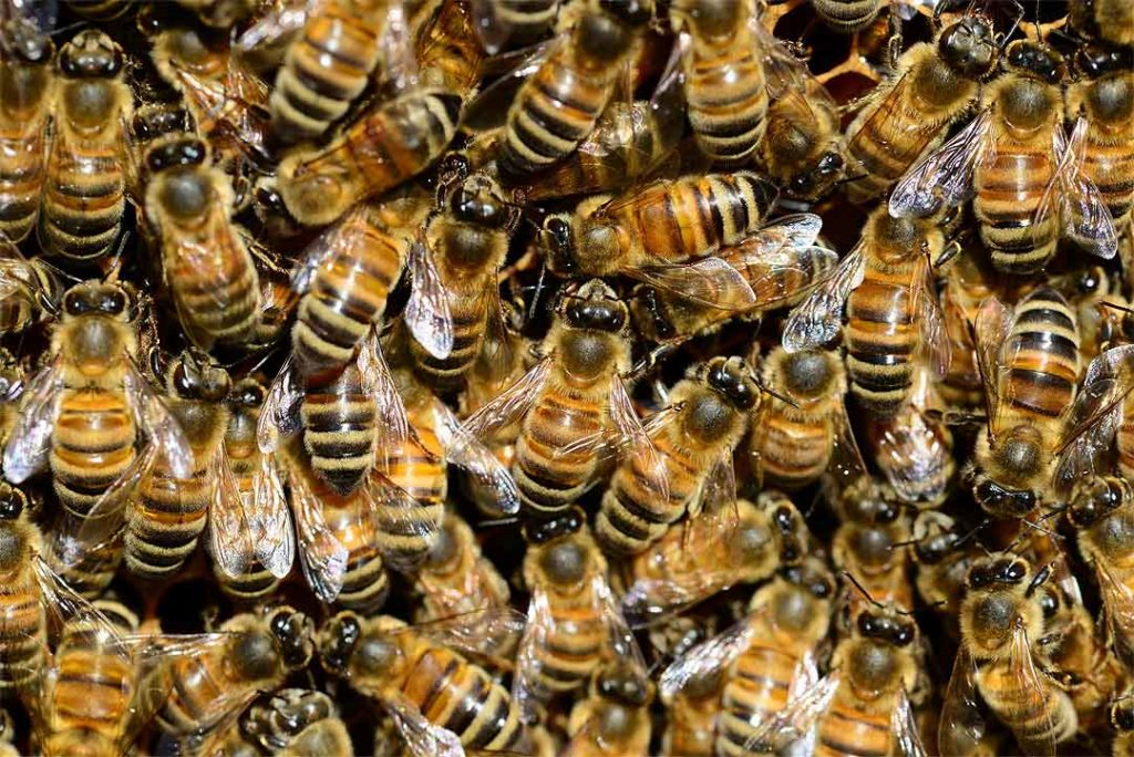 Create a Buzz For Your Business